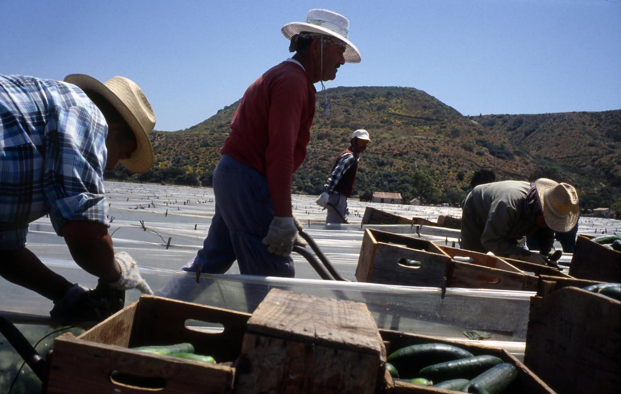 Imperial Beach. Travailleurs mexicains avec ou sans papiers.
